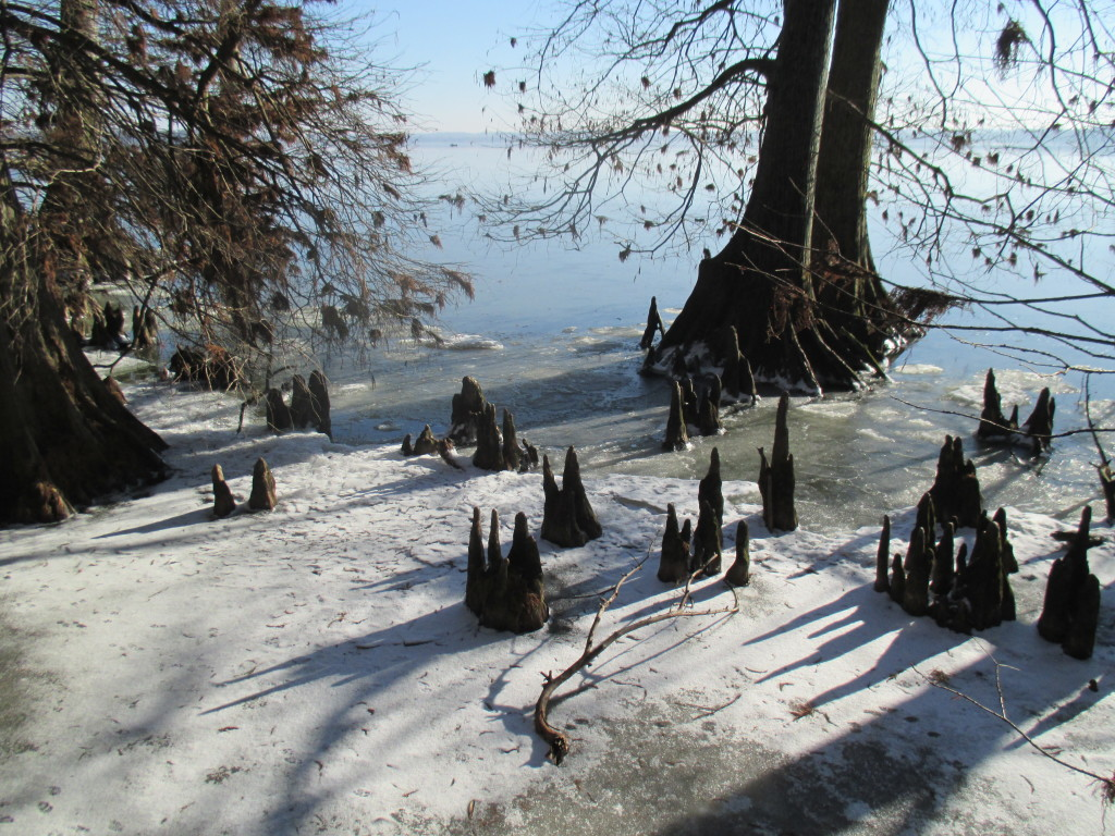 Reelfoot Lake, TN - Copyright (c) 2015 Robert D. Vickers, Jr.